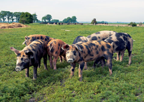 Choose the highest welfare, organic, local meat possible