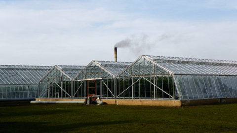 Avoid heated greenhouse grown food